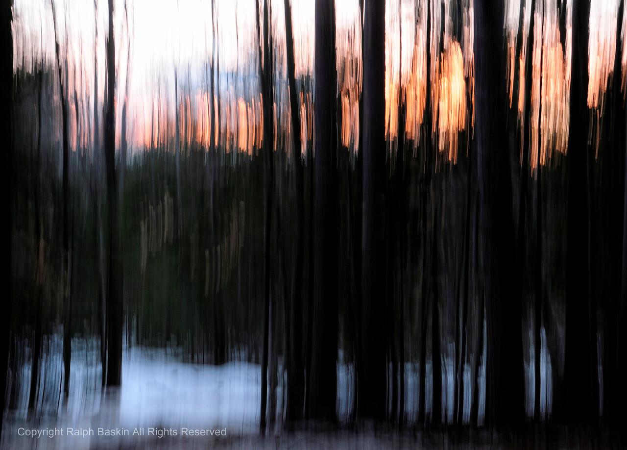 Maine Woods Sunset