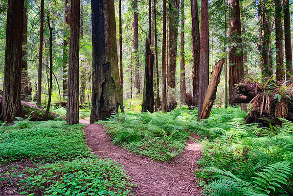 Humboldt Redwoods-7