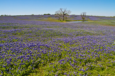 DSR_20120326Ennis Bluebonnets12-Edit