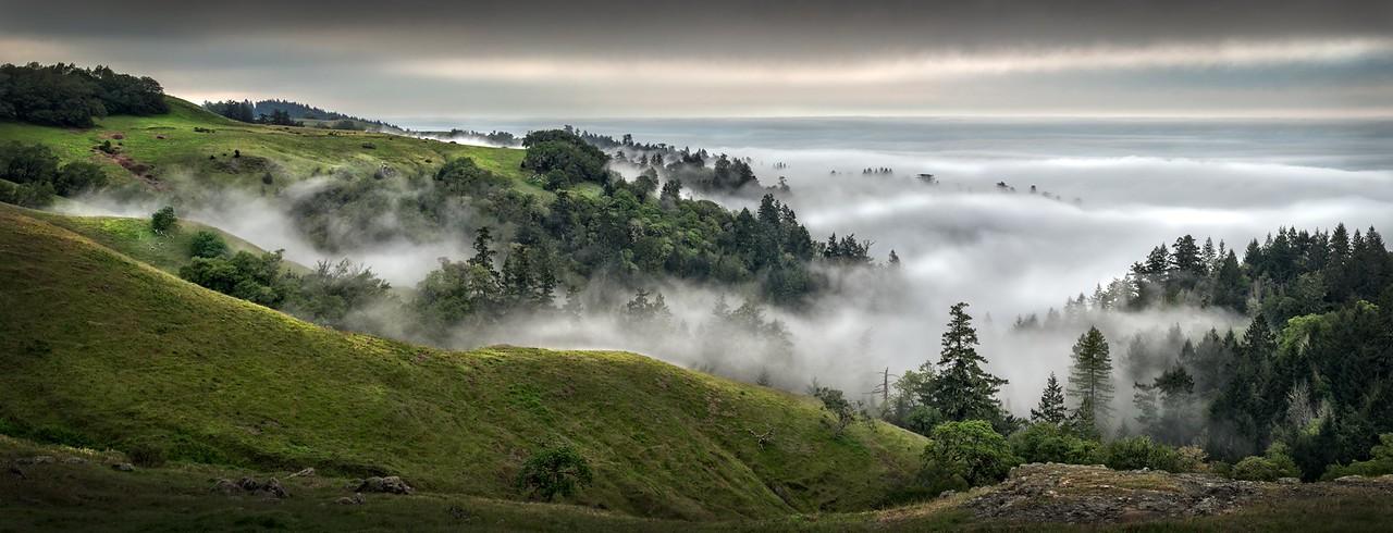 Valley Fog, Sonoma Coast, California