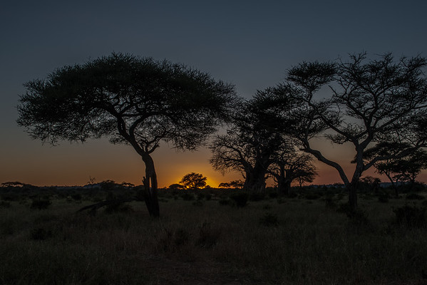Tanzania - Acacia and Baobab Trees