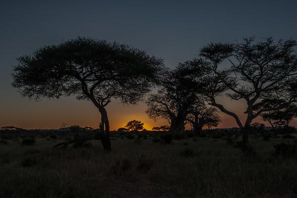 Tanzania - Acacia and Baobab Trees