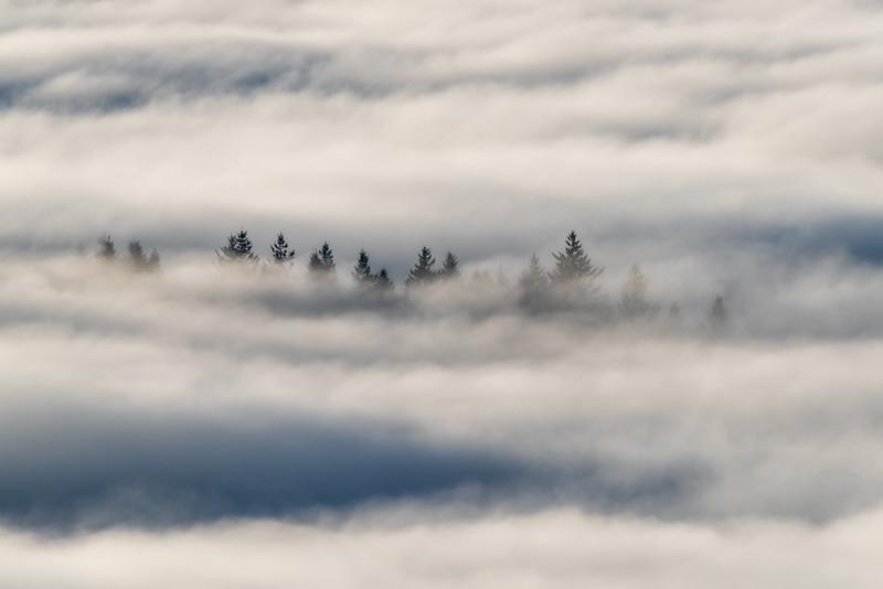 Fog Spires