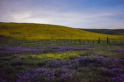 Midnight Flowers