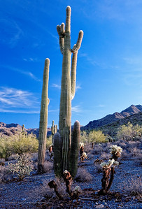 Hike through the McDowell Sonoran Preserve in Scottsdale, AZ