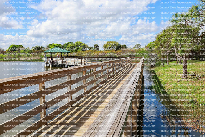 Boardwalk at Wakodahatchee Wetlands Park, located in Delray Beach, Florida. The park was created on 50 acres of unused utility land and is now part of the Great Florida Birding Trail.