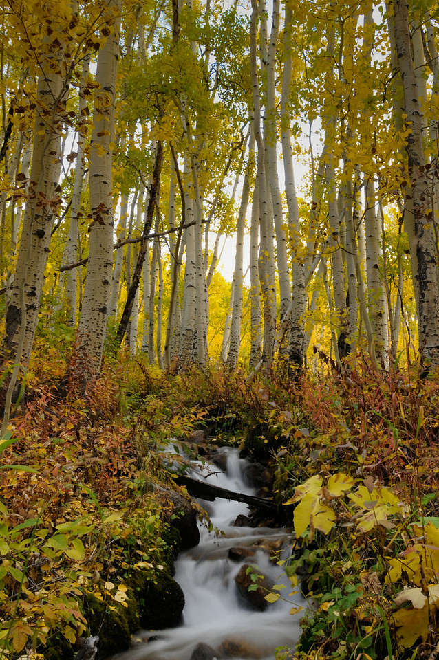 Downstream Aspen