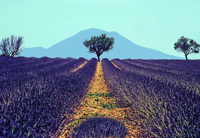 5  Lavender Fields Riez