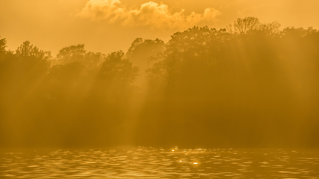 On Golden Light