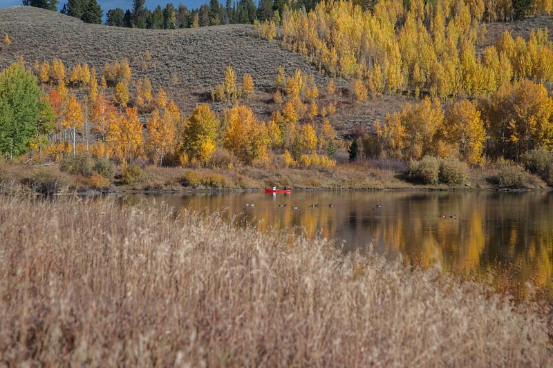 Snake River, Aspens, Teton Mountains
