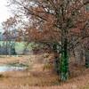 Rural December