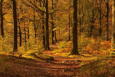 Lakeland woodland walk