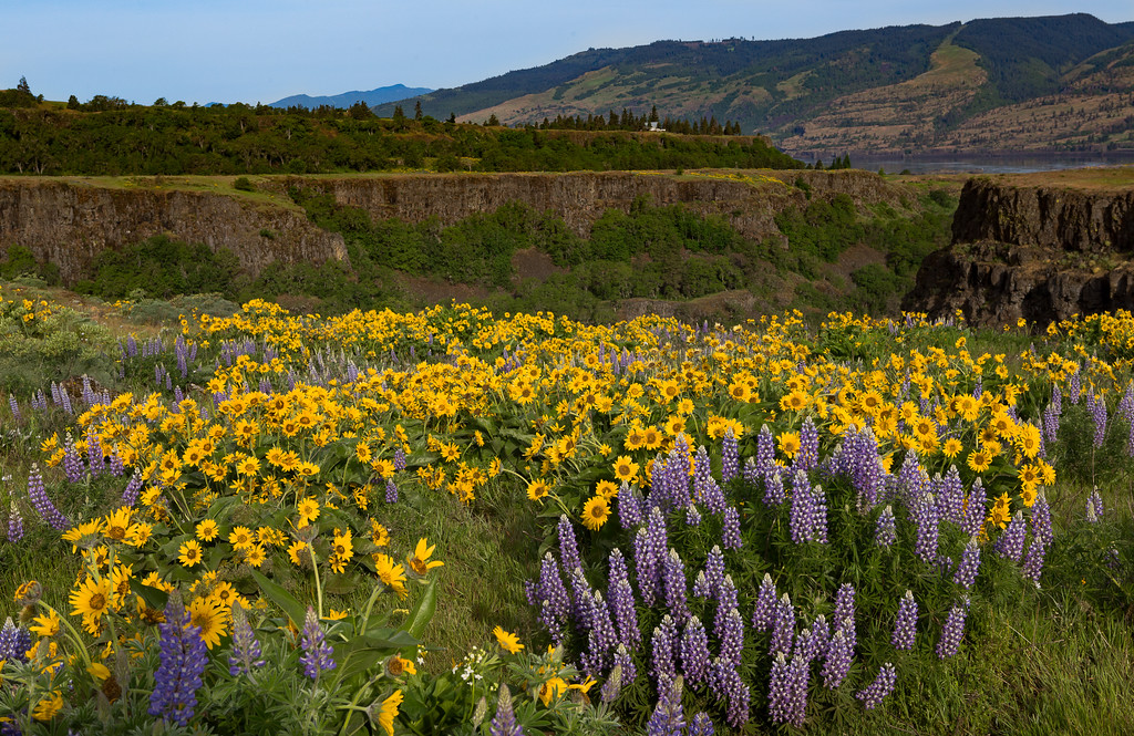 Springtime beauty in the Columbia River Gorge.