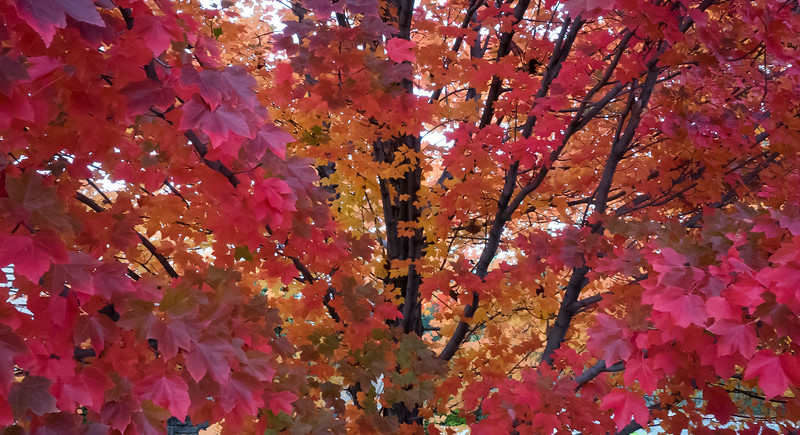 Fall Color 314