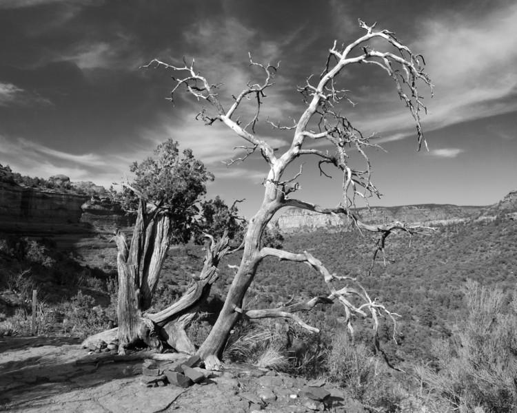 Vortex - Sedona, Arizona