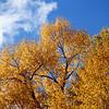 Fall Colors in Granby