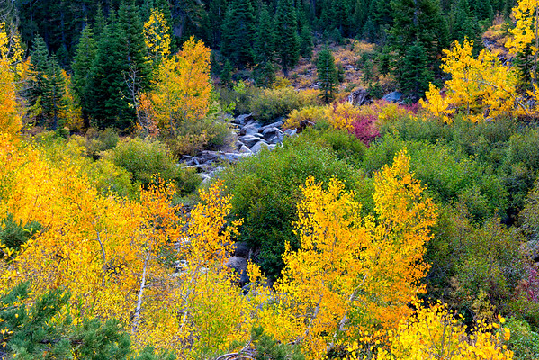 Deadman Creek Morning Fall Colors - Sonora Pass-12