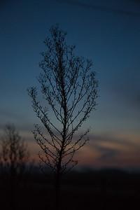 Sunrise Sprig