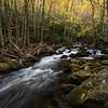 Autumn in Tremont