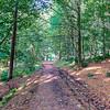 A Muddy Forrest Footpath in Scotland