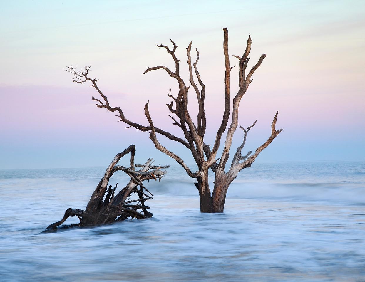 Edisto Island Boneyard
