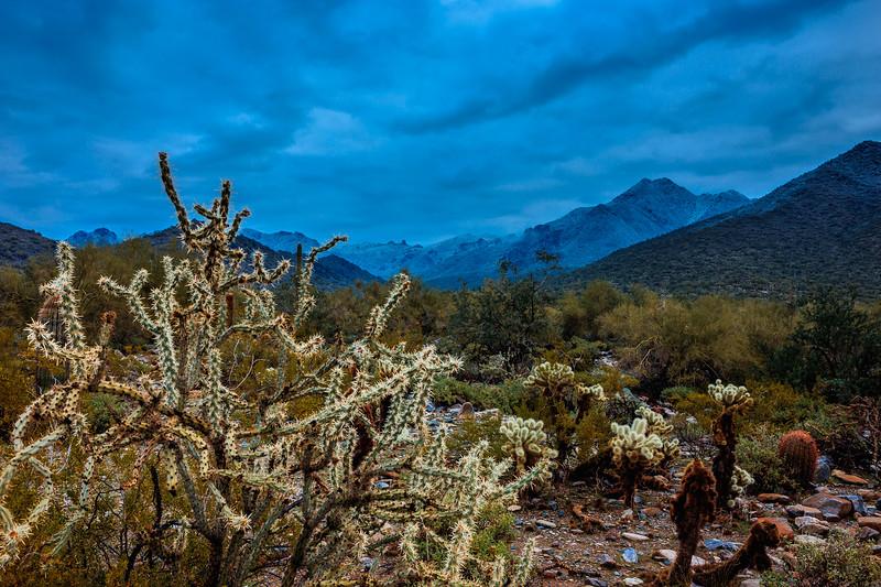 New Years Cactus-7588