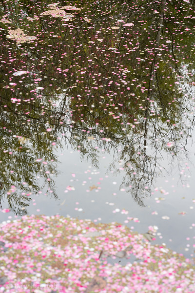 Blossoming Reflections