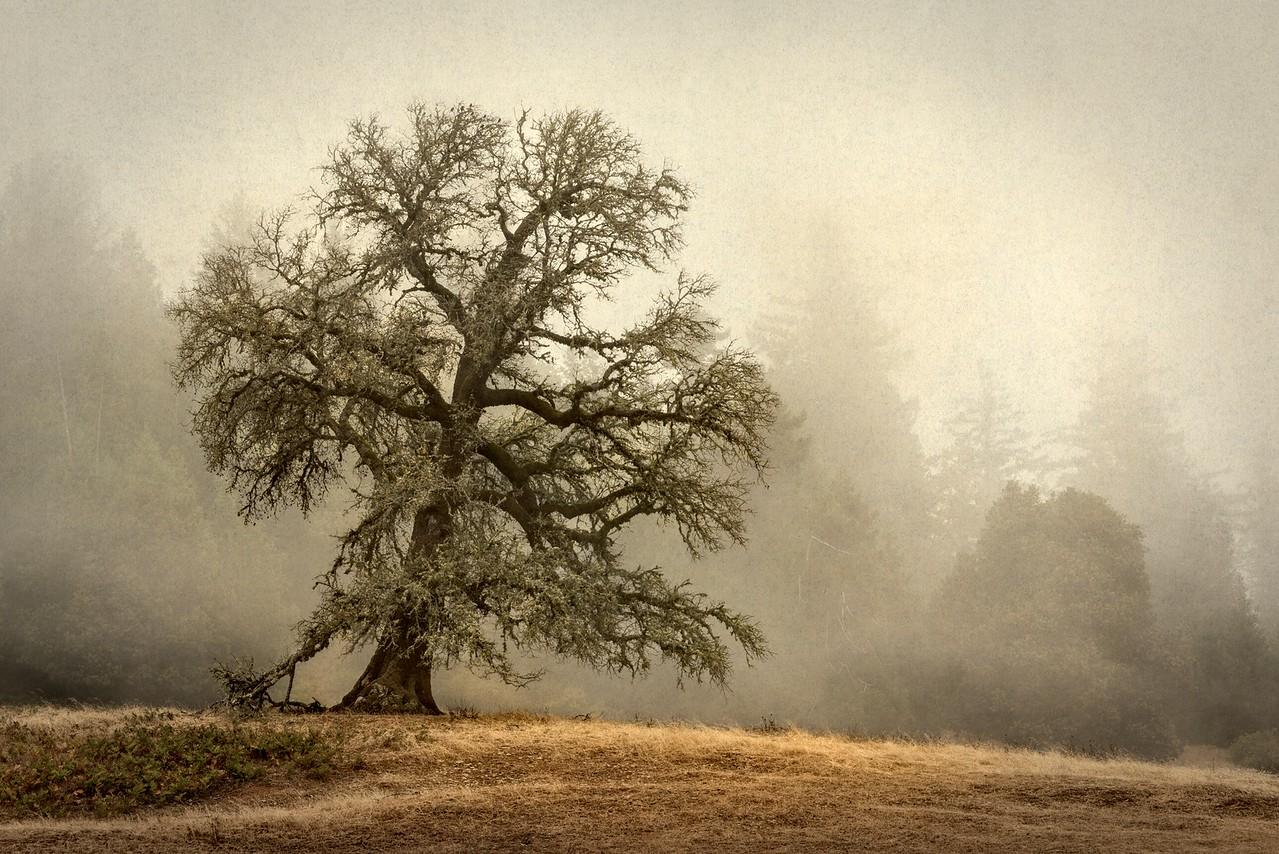Oak & Mist, Sonoma County, California