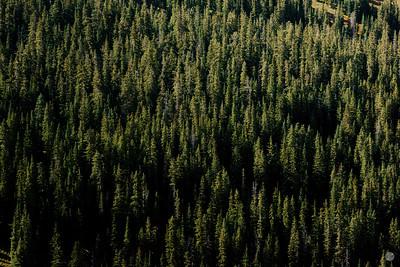 Loveland Pass Trees