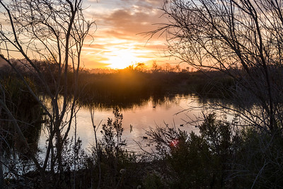 Ballona Wetlands at dusk