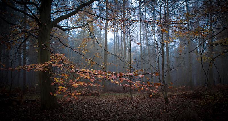 Warwickshire woodland
