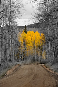 A small grove of aspen resists the oncoming winter