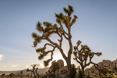 Joshua Tree NP, Hidden Valley at sunset and backlit.