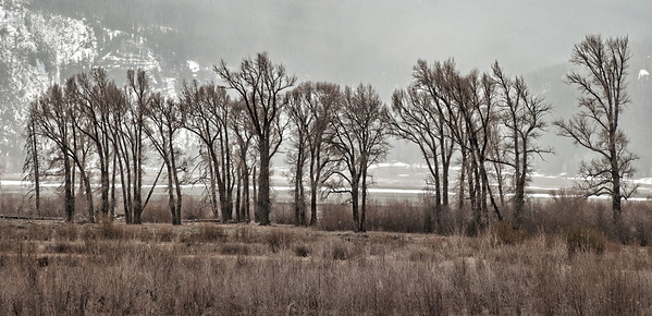 May 13<br /> <br /> Here is another image taken while I was traveling out west.  The weather was not always cooperative as is often the case during the spring.  When I took this shot of the trees, I was thinking it would look best in black and white.  What looks like fog in the background is really snow.<br /> <br /> I appreciate your comments.