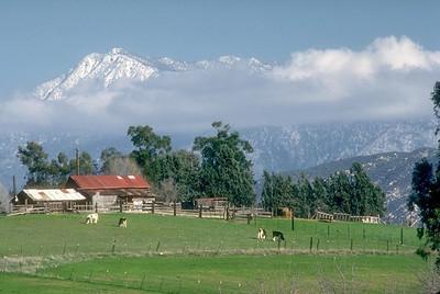 Farm, Mt San Jacinto, Ca