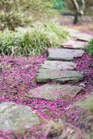 The Path Through the Fallen Ume Blossoms