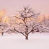 Breaking Winter Storm, North Andover, MA
