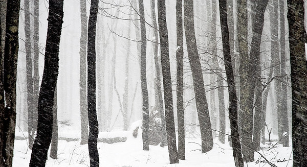 Forest Snowstorm