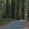 Driving through Redwoods
