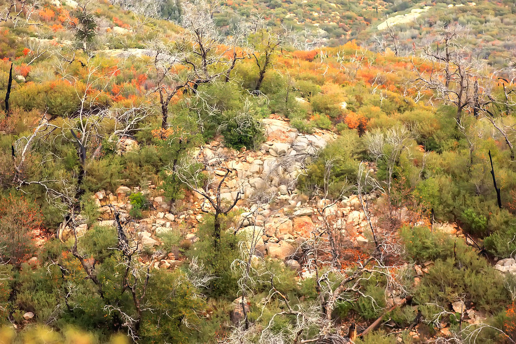 Cuyamaca Forests