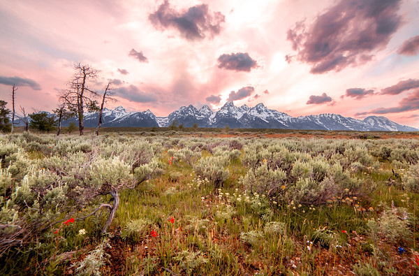 Jun 30 - Teton Meadows<br /> <br /> I think it's difficult to capture the front side of the Teton Range in the evening as they as encased in shadows.    So I focused instead on the meadows with the Tetons in the backgound at sunset.