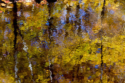 Yellow and blue reflection
