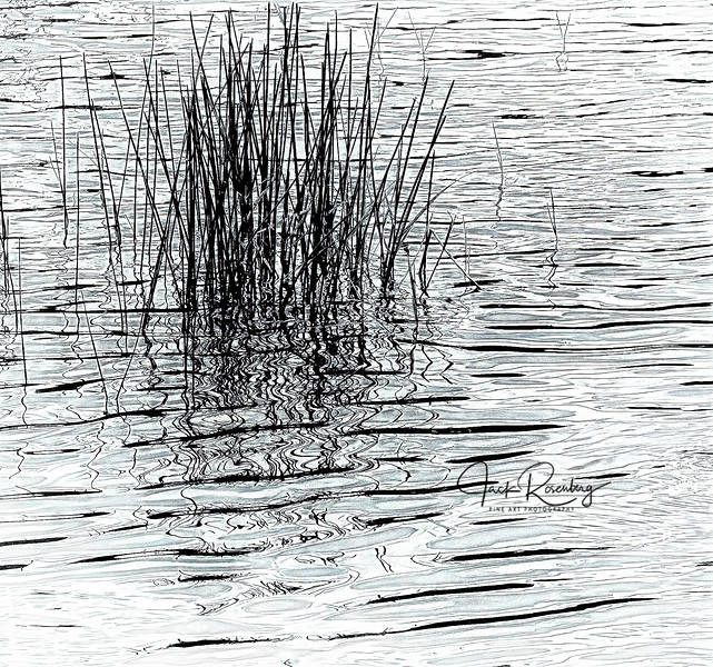 """Wiggly Reed Shadows"""