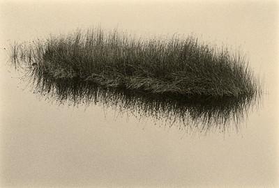 Gualala River Grass, California