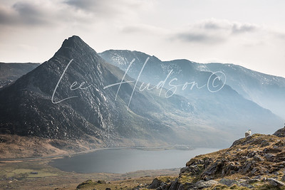 Mount Tryfan and sheep