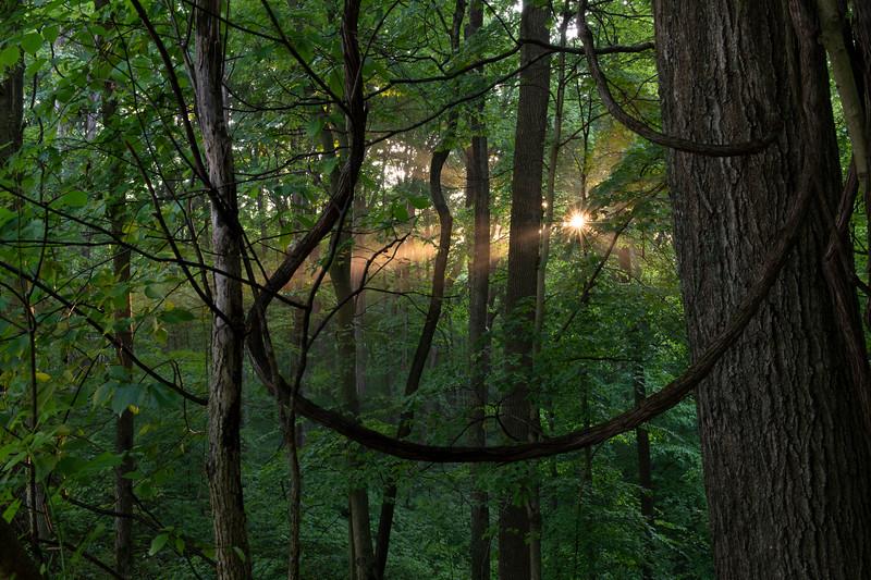 Green's Bluff Nature Preserve, IN