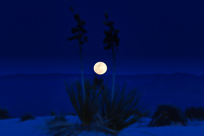 Yucca and Full Moon 2