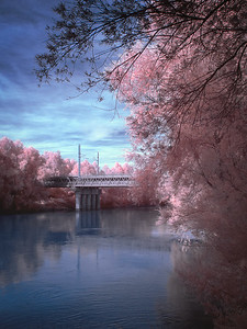 Flamingo Bridge