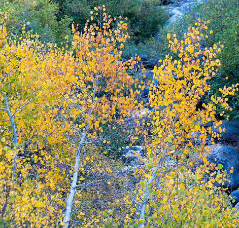 Deadman Creek Morning Fall Colors - Sonora Pass-6