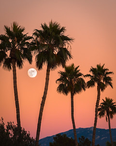 Moon with Palms